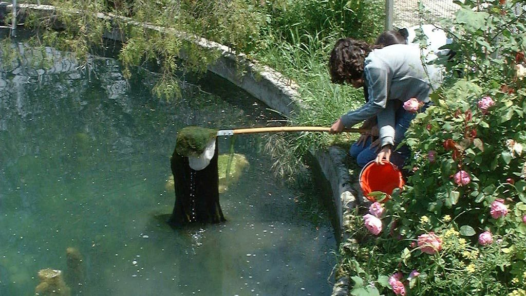 Pond pollution study